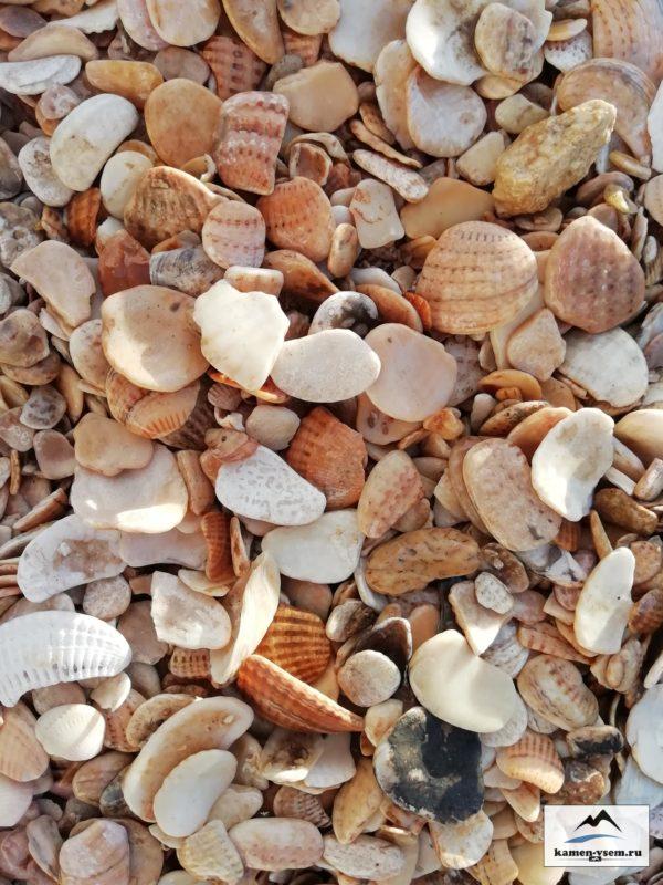 Природный натуральный камень, Морская Ракушка, ландшафтный дизайн