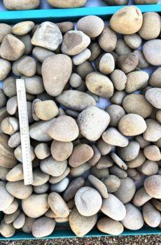 Галька жёлтая песчаник